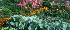 The Dacha kitchen garden