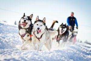 Husky racing